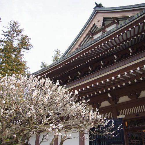 Main PIC 円覚寺と梅